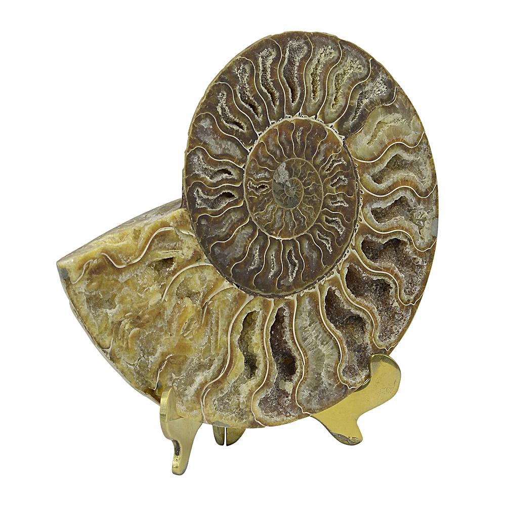 Spiral Fossil 2